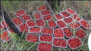 Трава на даче: выращивание своими руками ароматных, лекарственных растений, как измельчить, фото и видео