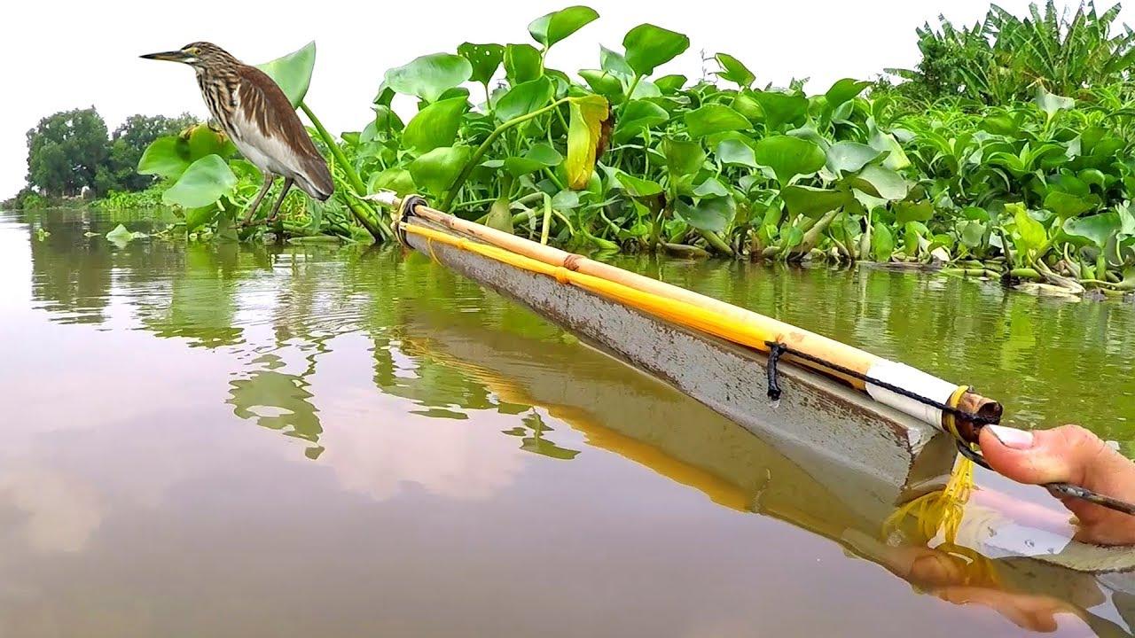 Săn Bắt Cò - BÌM BỊP trên sông bằng vỏ lãi mới nhất ✔️
