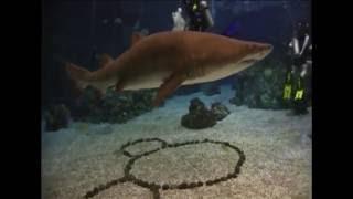 Disneyworld Dive Quest Scuba Dive