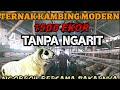 TIPS SUKSES TERNAK KAMBING MODERN TANPA NGARIT
