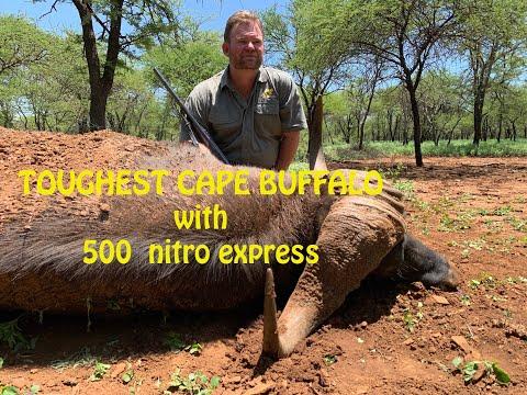 TOUGHEST CAPE BUFFALO WITH 500 NITRO EXPRESS
