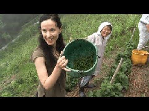 探索地區美味 探訪隱蔽村莊 第一部