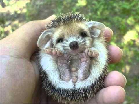 gli animali:esseri viventi non giokattoli