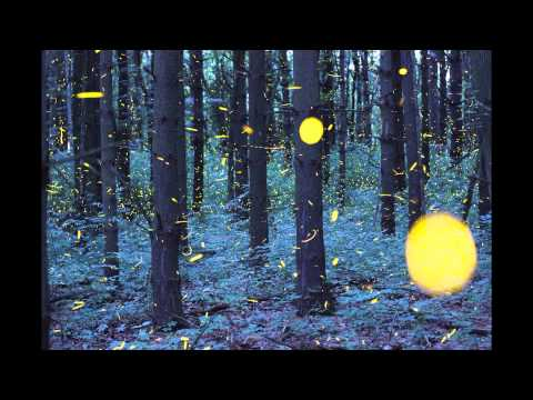 Time-lapse Scenes of Swarming Fireflies by Vincent Brady | Colossal