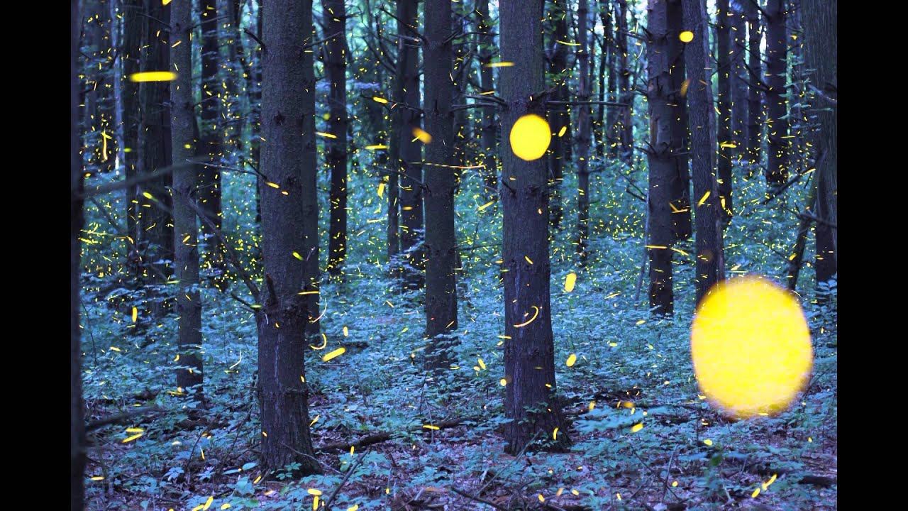 The Firefly Time Lapse graphy by Vincent Brady Music by