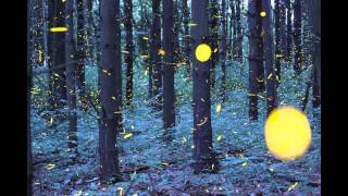 The Firefly Time-Lapse - Photography by Vincent Brady - Music by Brandon McCoy