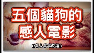 五個貓貓狗狗真人真事改編的感人故事,HenHenTV奇異世界#22