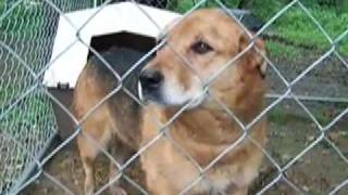 Two Dogs Rescued From Chains & Pens In Somerset County, Pa During The Dog-a-day Summer Challenge
