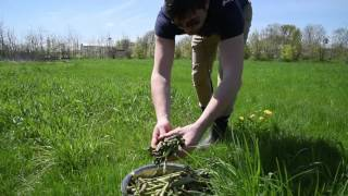 Exposition agriculturelle : MixOFF - Permaculture