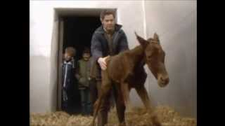 Ballad of the Irish Horse - The Chieftains