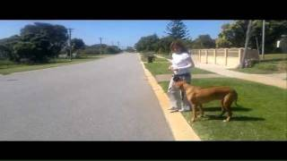 "Teaching Your Dog Not To Cross The Road (boundary) - No Matter What - Until Given The ""ok"""
