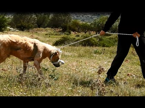 Dramatic rescue of a dog that had lost all hope