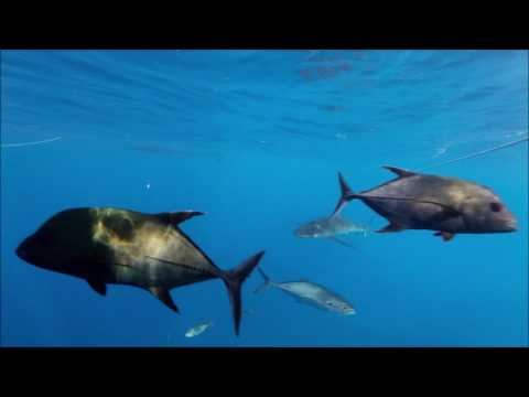 Revillagigedo Archipelago and Sea of Cortez 6/20/17-6/30/17