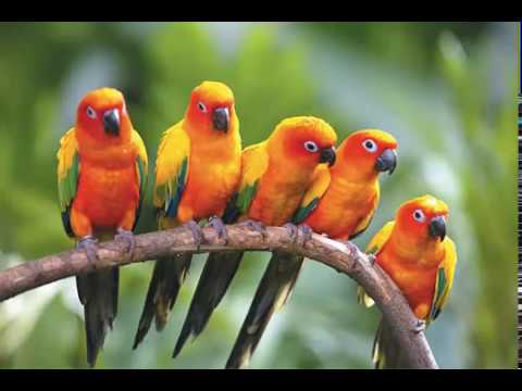 Natural Beauty Of Birds