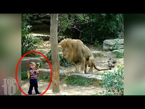 TERRIFYING TIMES ANIMALS ESCAPED FROM ZOOS