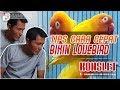 Tips Dan Trik Cara Bikin Lovebird Konslet Orang Bandung Serta Perawatan Sehari Harinya  Mp3 - Mp4 Download