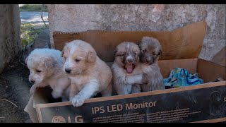 Someone Left these precious little Puppies to Survive!