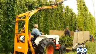 SPECIAL REPORT: Farming for Beer, Northern Michigan s Growing Hops Industry