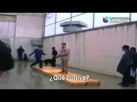 Entrevista a el Chapo Guzman En 1993 (Resuvido - 2014)