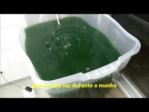 Cultive spirulina em casa - Parte 2, sistema de cultivo