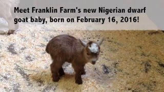 there s a new kid on the block at franklin farm