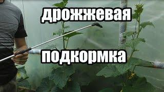 видео Как бороться с тлей