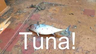 Tuna sea fishing offshore adventure Морская рыбалка Тунец How to catch tuna Как поймать тунца