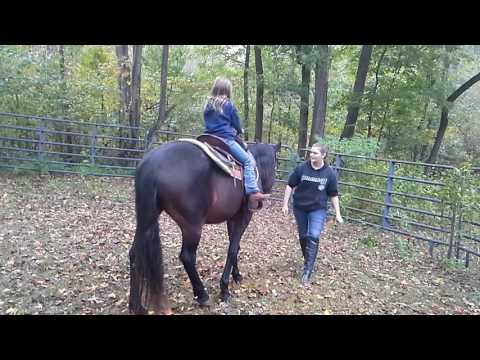 Wonderful Horse for Lease $150 per month