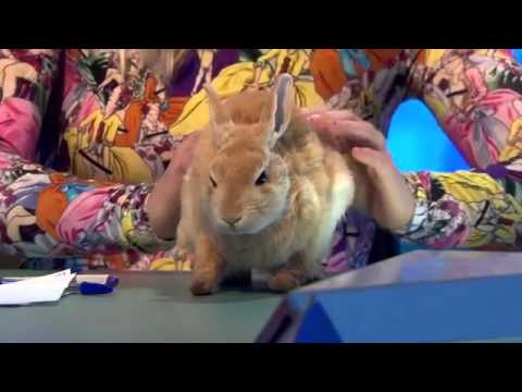 8 Out Of 10 Cats Does Countdown Series 7 Episode 3