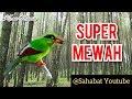 Masteran Burung Ekek Keling Super Mewah Format Mp3