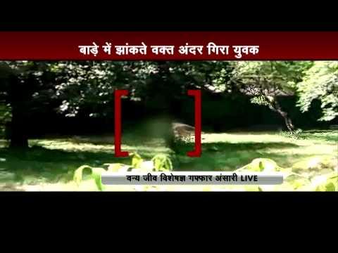 Live Video: White tiger kills Class 12 student at Delhi zoo-Part 3