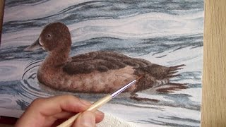 drawing a duck with three pencils - one new color every month #4