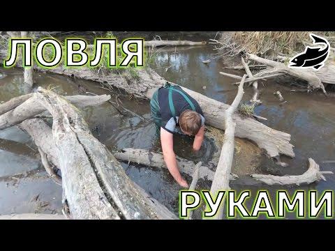 Современный способ ловли рыбы. Ловля карася и карпа руками. Ловля рыбы руками.