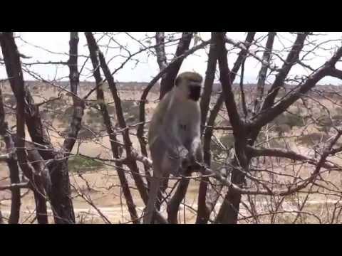Tanzania, Tarangire National Park