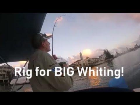 Best Beginner Rig For BIG Whiting + Estuary Fish