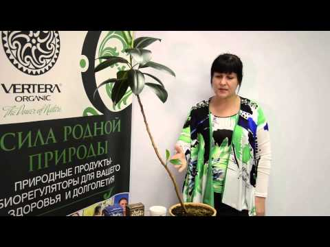 Цветки иван-чая купить по низкой цене, цвет кипрея оптом и