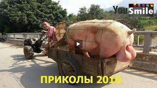Лучшие Приколы 2016, #112 Смотреть видео приколы 2016 лучшее Смешное видео новое 2016