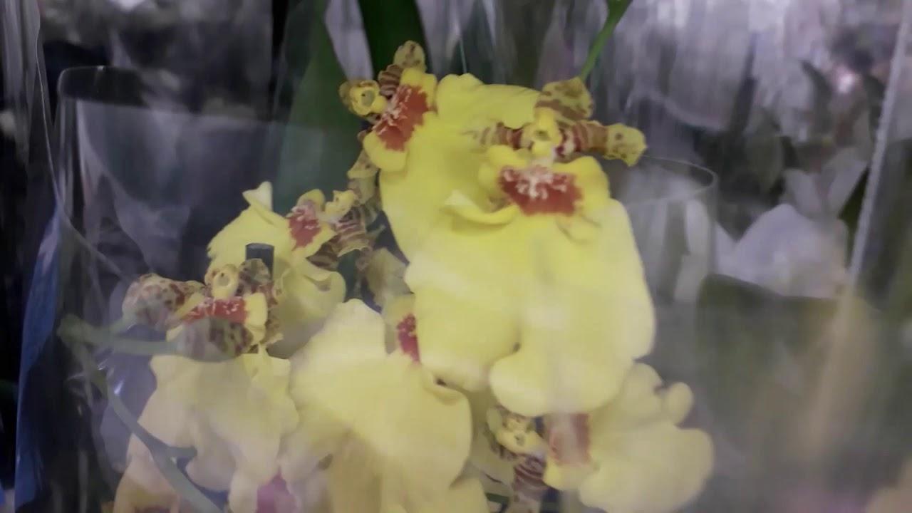 Завоз цветов в Леруа г.Кемерово 30.06.2020