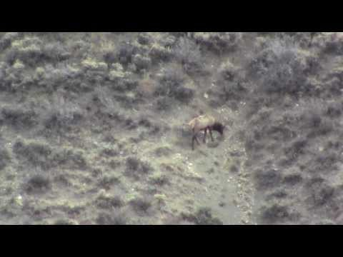 Elk Hunt 2012