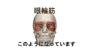 図解 = 眼輪筋  【まぶたピクピク】