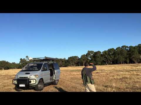 Australian Peregrine Falcon flight to drone