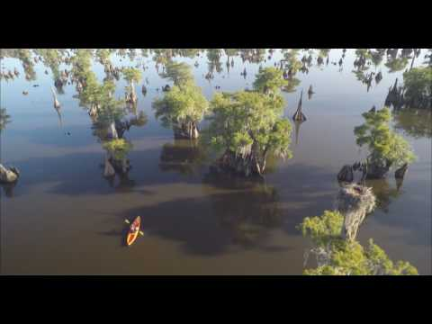 Florida Travel: An Aerial View of the Dead Lakes
