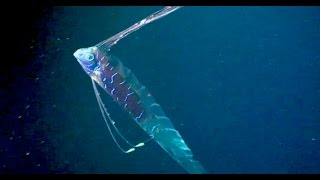 Oarfish: The Ultimate Fish Tale