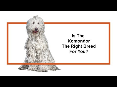 Learn all about the Komondor and why they could be your perfect pet!