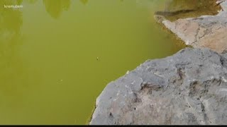 Toxic blue-green algae sparks concern in local waters