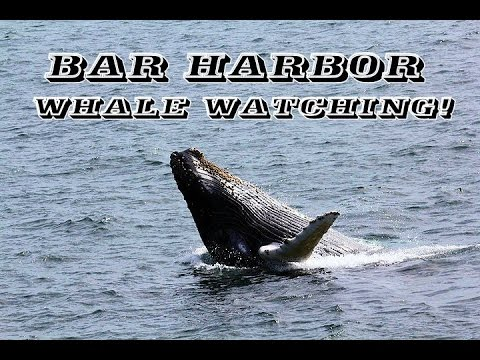 Humpback Whale Watching in Bar Harbor, Maine