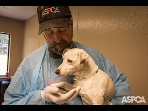 Видео: Traumatized Puppy Mill Dog Makes an Amazing Recovery