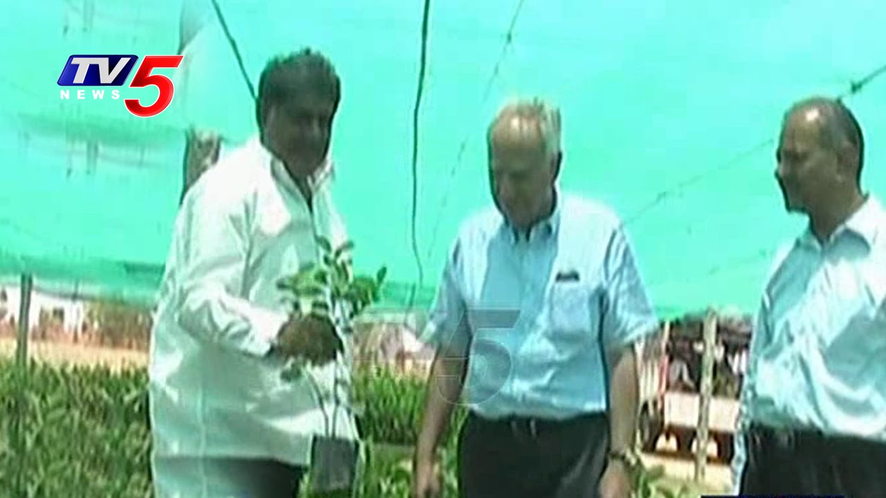 Thailand Fruit Plant Nursery In Jadcherla Farmer Krishna Reddy Telangana Apple Tv5 News Youtube