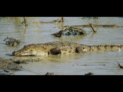 Sri Lanka: Krokodil tötet Briten im Urlaubsparadies