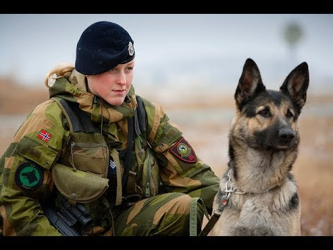 This Day In History March 13th: The US Army Starts The K-9 Corps